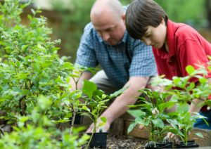 Read more about the article Covid-19 shutdown changes gardening plans