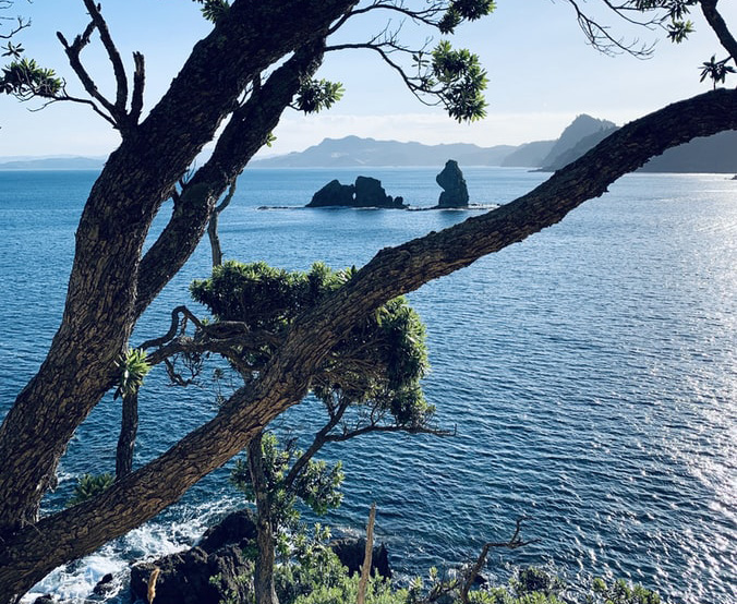 You are currently viewing Calls to close Coromandel borders during Covid-19 shutdown