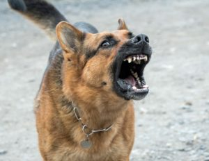 Read more about the article Dog attacks increase during Covid-19 shutdown