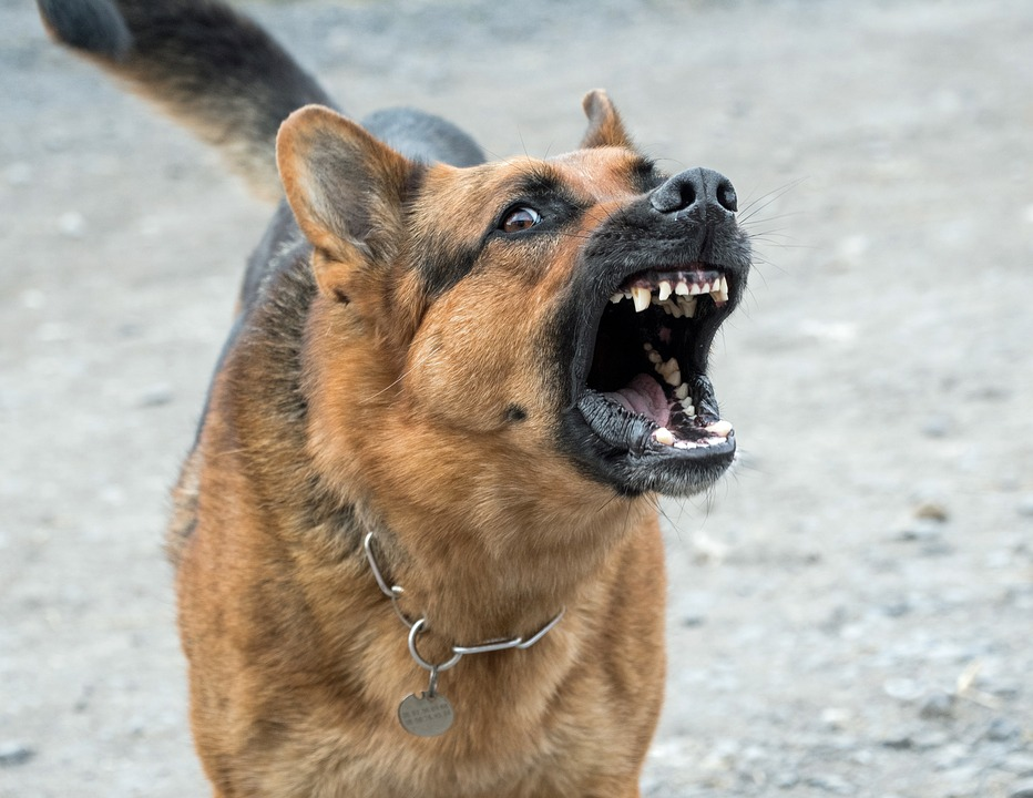 You are currently viewing Dog attacks increase during Covid-19 shutdown