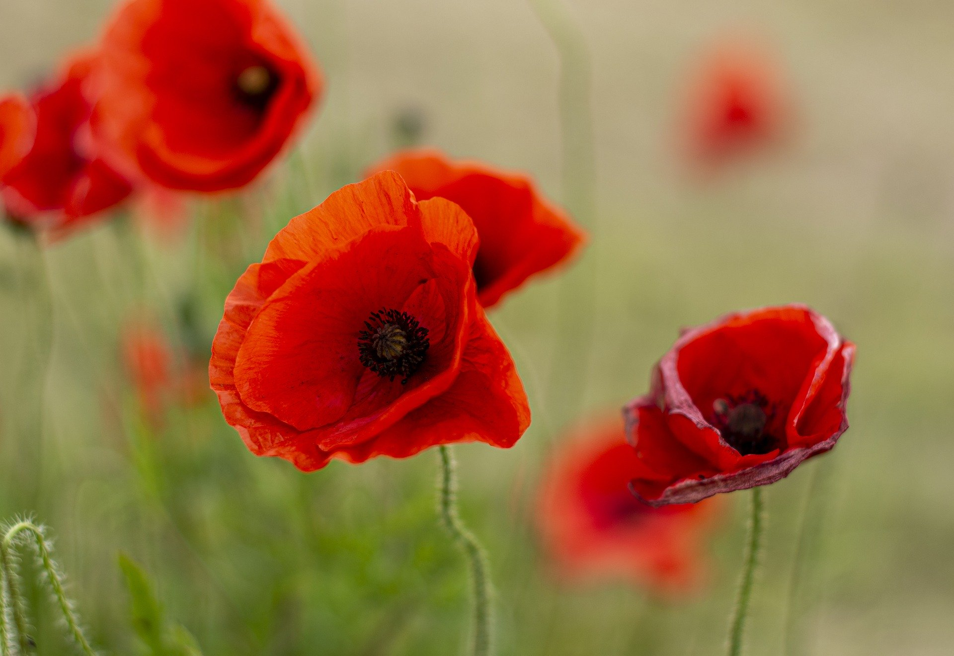 You are currently viewing Anzac services, parades cancelled