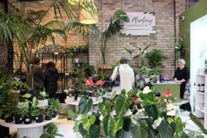 Read more about the article 'Jungle shop' inspired by love of plants