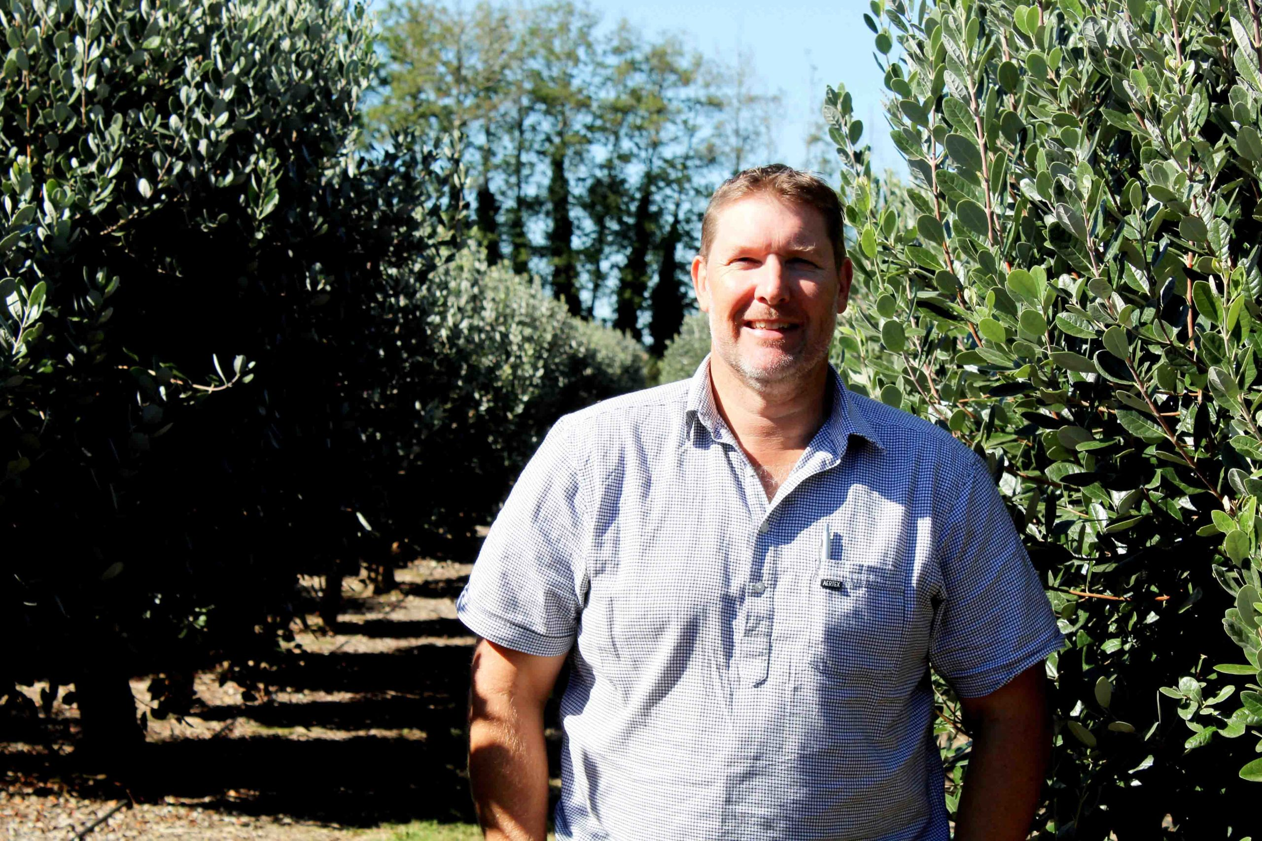 You are currently viewing Feijoas the fruit of orchardist's labour