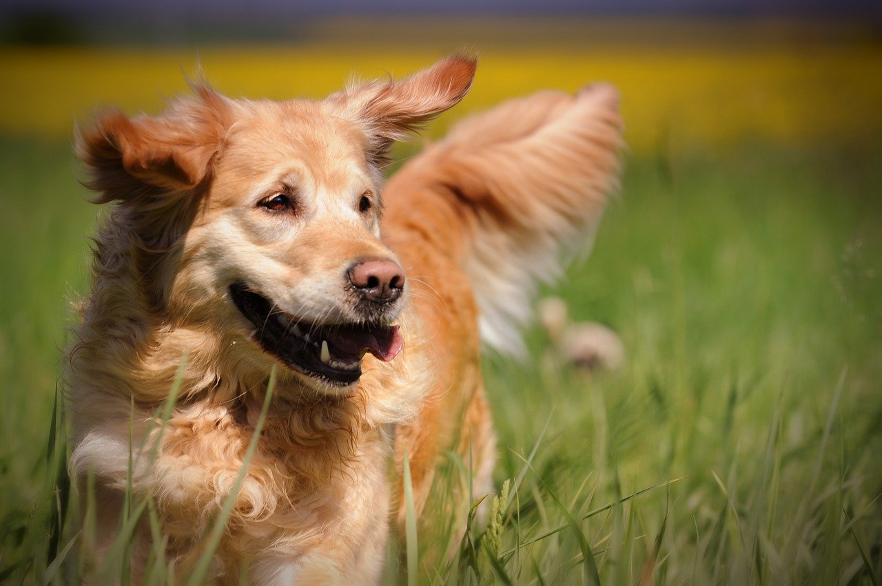 You are currently viewing Proposed dog park sparks safety fears