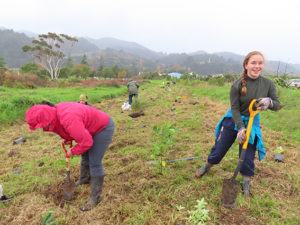 Read more about the article 800 trees planted at Solarpunk event