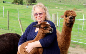 Read more about the article Alpacas find success at home and overseas